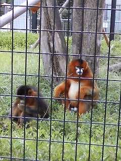 ジャガーさん in 東山動物園